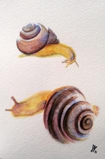 Escargot SB
