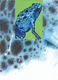 Frog SB